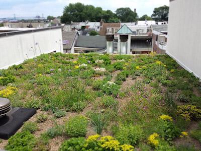 Green roofs Philadelphia